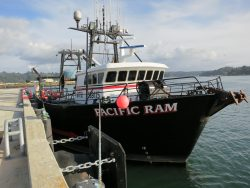 Fishing-pacific-ram